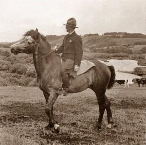 SvendLund-hest