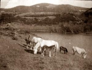 heste-turbinesoen